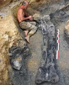 On dégage le fémur de sauropode de plus de 2,2 mètres de long. © Grand Angoulême 2010 - P. Blanchier