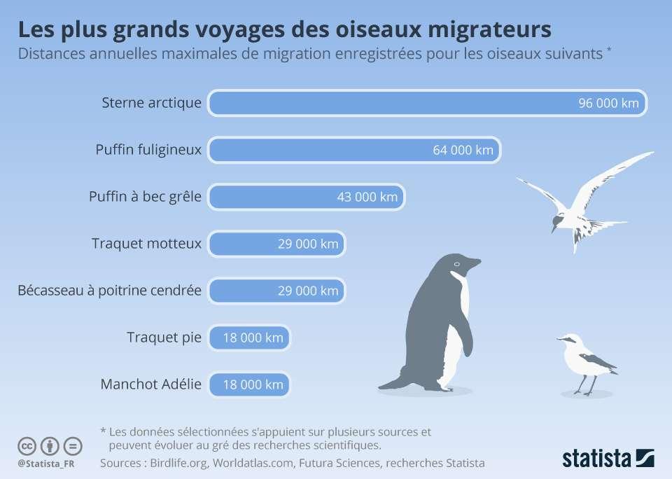 Ces oiseaux parcourent des dizaines de milliers de kilomètres lors de leur migration. © Statista