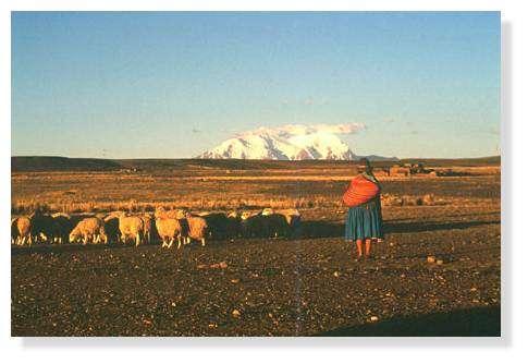 L'Illimani, une barrière blanche au-dessus de l'Altiplano bolivien. © IRD/Bernard Francou.
