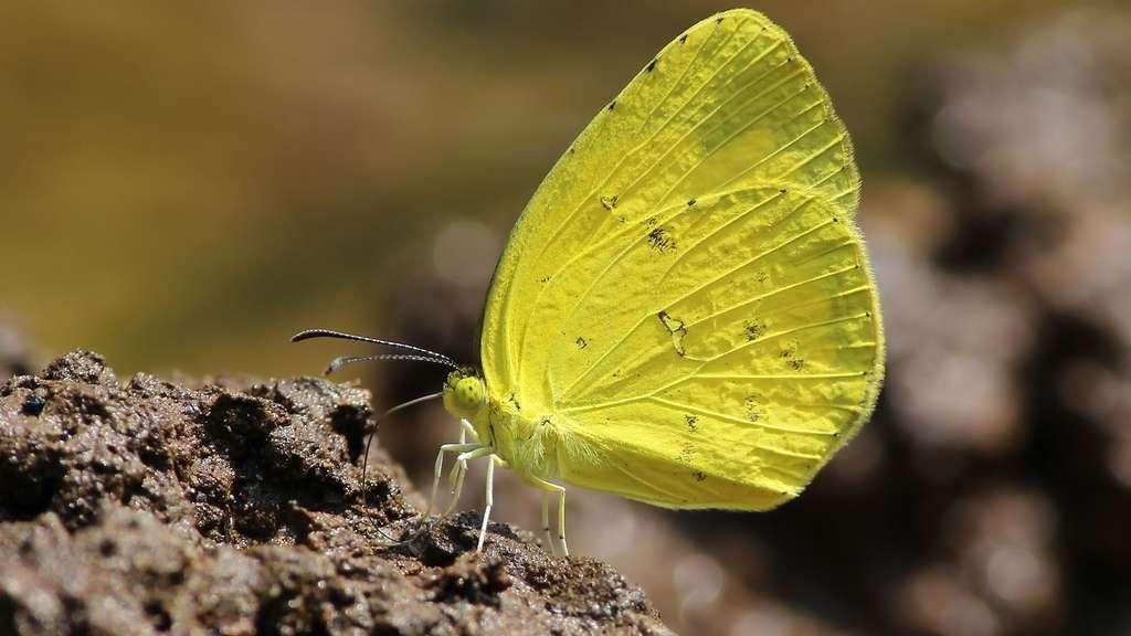 Du jaune dans les herbes