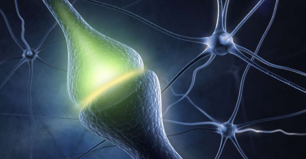 Synapse. © Sashkin, Shutterstock