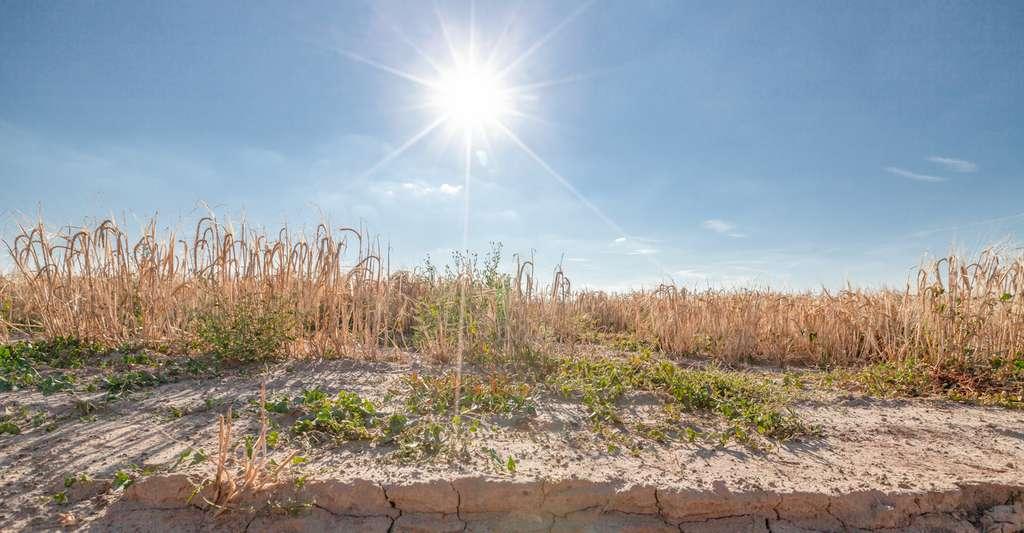 Le rapport du Groupement d'experts intergouvernemental sur l'évolution du climat (Giec) juge que des mesures portant sur la qualité de la nutrition permettront de soulager les terres. © hykoe, Fotolia