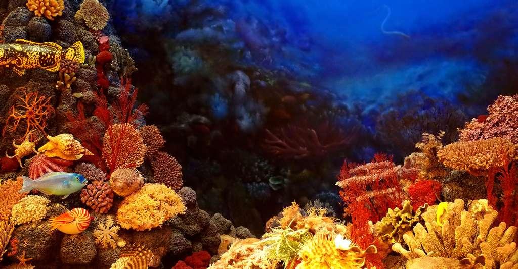 Récif de corail butiné par des poissons. © Wanzi989813 CCO