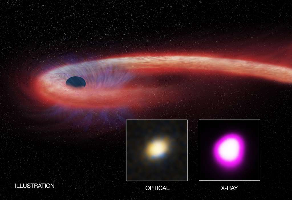 Illustration d'un TDE, un événement de ruptures d'une étoile par les forces de marée. En rouge, les restes de l'étoile sont chauffés à plusieurs millions de degrés. Une partie de la matière est expulsée vers l'extérieur (en bleu). © Nasa, CXC, M.Weiss