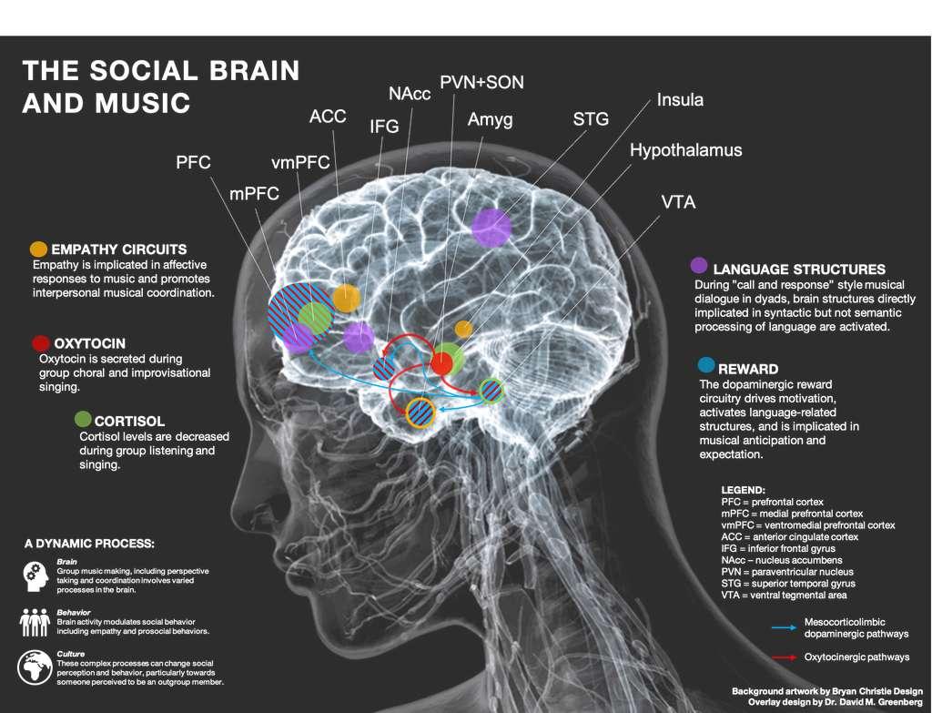 Modèle cérébral qui révèle les fonctions sociales et les mécanismes cérébraux qui sous-tendent les adaptations musicales. © Dr. David M. Greenberg, artwork by Bryan Christie Design