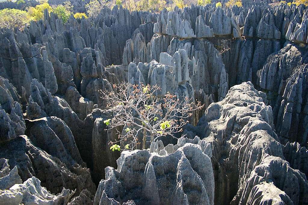 La réserve naturelle intégrale du Tsingy de Bemaraha est inscrite sur la liste du patrimoine mondial de l'Unesco. Située dans l'ouest de Madagascar, cette réserve bénéficie d'une faune extrêmement riche et diversifiée. © Gloumouth1, Wikipédia, GNU 1.2