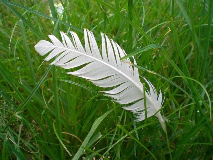 Le plastique à base de plumes a pour but de préserver l'environnement, à moindre coût, tout en valorisant des tonnes de déchets. © Mai Velasquez, Stockvault