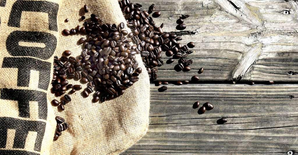 Grains de café bio de Bolivie. © freefaithgraphics, Pixabay, DP