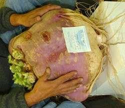 Ce navet de près de 18 kg, record absolu, a été cultivé en Alaska. © Scott Robb