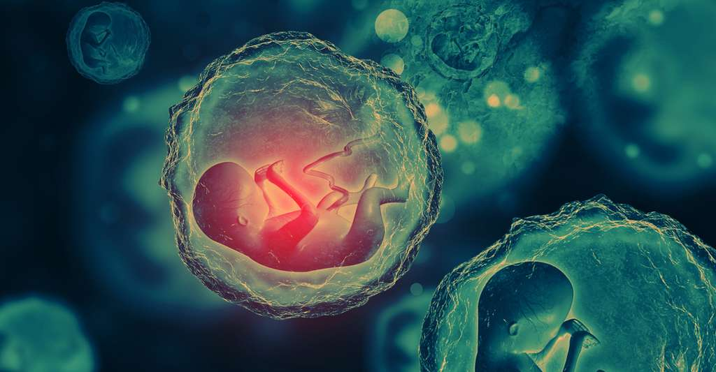 Le microbiote placentaire n'existe vraisemblablement pas. © Crystal light, Fotolia