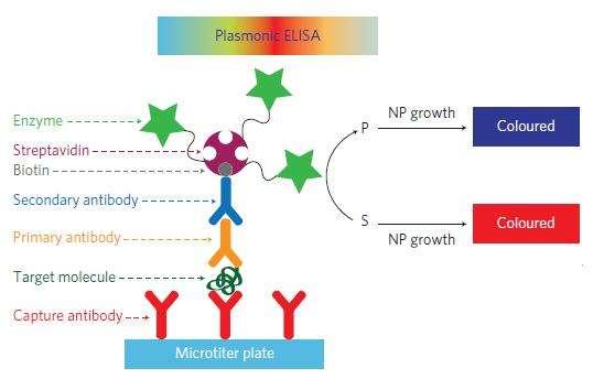 Ce schéma explique le fonctionnement de la technique. Une solution contenant des nanoparticules d'or et de l'eau oxygénée apparaît visuellement de couleur rouge. En présence de sérum, le biomarqueur (target molecule) se fixe à l'anticorps de capture (capture antibody). Deux nouveaux anticorps vont alors être placés dans le milieu (primary et secondary antibodies), dont le dernier est équipé d'une enzyme, qui n'est active que si le biomarqueur a été fixé à l'anticorps. Les nanoparticules d'or (NP) vont alors changer de structure : la solution devient bleue. © De la Roca et Stevens, Nature Nanotechnology