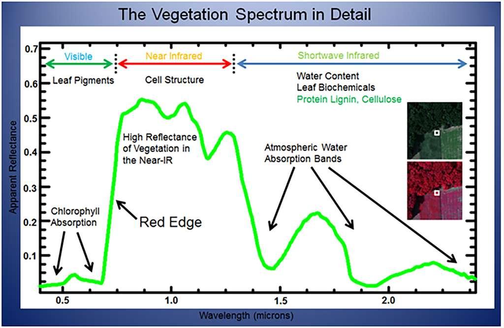 Exemple de spectre de la végétation dans différentes longueurs d'onde. © Elowitz, Mark R