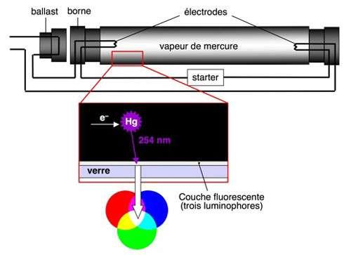 Principe de fonctionnement d'un tube fluorescent. © B. Valeur