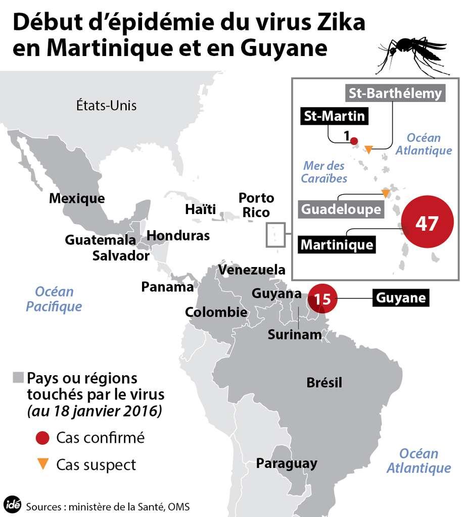 Depuis le mois de décembre, les cas de fièvre Zika en Guyane et en Martinique ont été confirmés. L'agent de cette maladie est un arbovirus, c'est-à-dire un virus transmis par des arthropodes, par exemple des insectes. C'est le cas du virus Zika. Comme tous les membres de ce groupe (qui n'en est pas un du point de vue phylogénétique), il passe très bien la barrière des espèces. © Idé