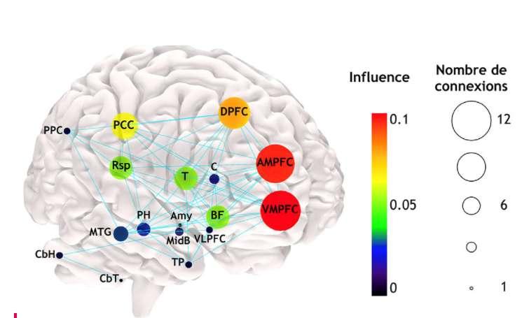 Modèle anatomique et fonctionnel du réseau du « mode par défaut » (2019). Chaque gommette, par sa taille et sa couleur, indique l'importance de cette région dans le réseau en mode par défaut. VMPFC : cortex préfrontal ventromédian ; AMPFC : cortex préfrontal antérieur médian ; DPFC : cortex préfrontal dorsal ; PCC : cortex cingulaire postérieur ; PPC : cortex pariétal postérieur ; C : noyau caudé ; Rsp : cortex rétrospénial ; T : thalamus ; BF : cerveau antérieur basal ; VLPFC : cortex préfrontal ventro-médian ; Amy : amygdale ; MidB : mésencéphale ; PH : région parahippocampique ; MTG : gyrus temporal ; TP : pôle temporal ; CbH : hémisphère cérébelleux (cervelet) ; CbT : tonsil cérébelleux. © Modèle cérébral de Schotten, CC by-sa 4.0