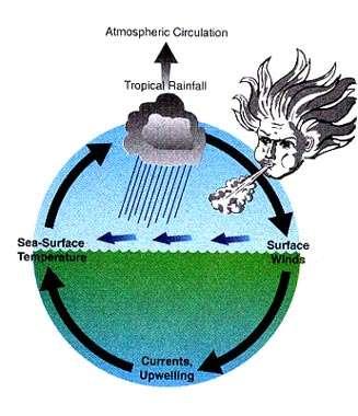 Figure 10 Comme des interlocuteurs engagés dans un dialogue, l'Océan Pacifique tropical et l'atmosphère qui le recouvre s'influencent mutuellement et interagissent. Des modifications dans la force des alizés (vents d'est) le long de l'équateur induisent des modifications des courants océaniques et de l'upwelling, qui induisent des modifications de la température de surface de la mer, qui en retour altèrent la distribution des pluies, qui altère la force des alizés, ...