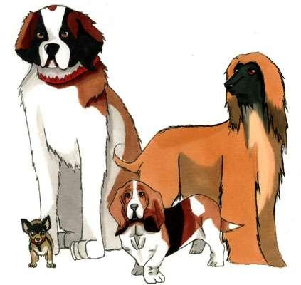 Les races de chien sont très diversifiées, pourtant elles descendent toutes du loup dessin Niki Albiane Nox licence CC by-sa 2.0