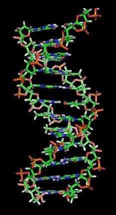 L'inactivation des gènes Siglec13 et Siglec17 a peut-être contribué à sauver l'espèce humaine menacée d'extinction il y a près de 100.000 ans ! © Zephyris, Wikipedia, cc by sa 3.0