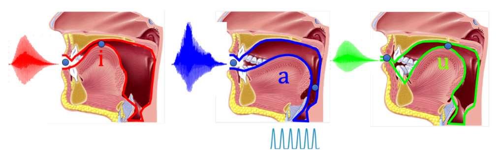 Les différents sons en fonction de la position du conduit vocal et des lèvres. © Droits réservés