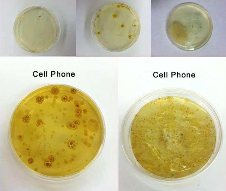 Selon différentes études réalisées au cours des dernières années, les écrans tactiles des téléphones mobiles (cell phone) sont porteurs d'un taux de bactéries plus élevé que celui que l'on trouve sur (de gauche à droite) une chasse d'eau, une poignée de porte ou une lunette de W.C. © PhoneSoap/KickStarter