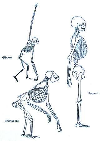 Position de la colonne vertébrale. © DR