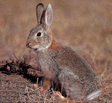 Quel est l'état des sols à proximité de Tchernobyl, et que sont devenus les animaux ? © DR