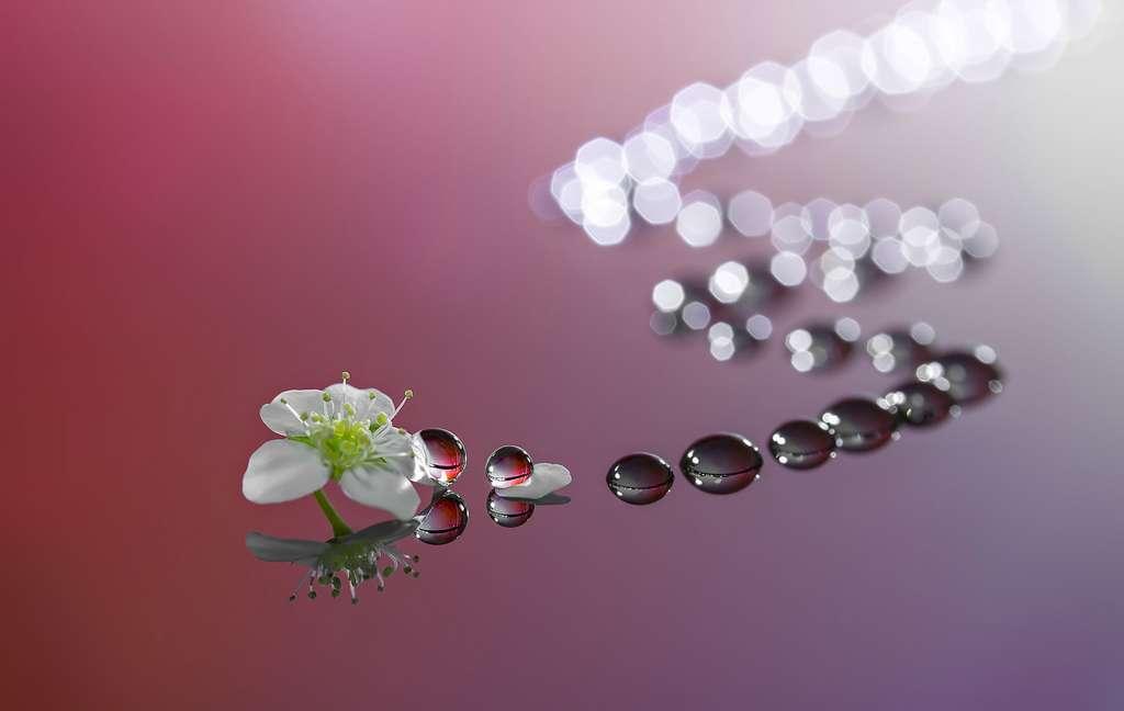 Une fleur qui laisse son empreinte