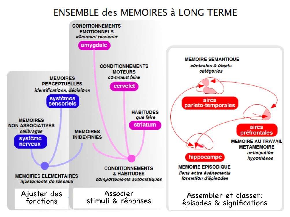 La complémentarité des différents types de mémoire permet d'expliquer les interactions entre mémoire et émotions, et les conséquences d'un stress sur le fonctionnement cérébral. © DR