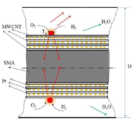 Structure d'une fibre contractile artificielle. La réaction exothermique entre l'oxygène (O2) et l'hydrogène (H2) a lieu à la surface des nanotubes faits de plusieurs couches de carbone (MWCNT). La chaleur produite, en rouge, est conduite vers le matériau à mémoire de forme (SMA). Des particules de platine (Pt) sont aussi enchâssées entre les différentes couches de carbone. Cette réaction chimique provoque l'apparition d'eau (H2O). © adapté de Tadesse et al. 2012, Smart Materials and Structure
