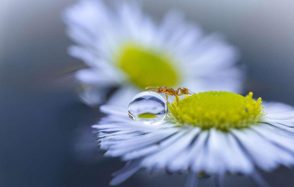 En attendant que vienne une fourmi