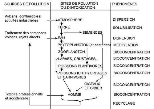 Bioaccumulation Hg. © Université de Picardie