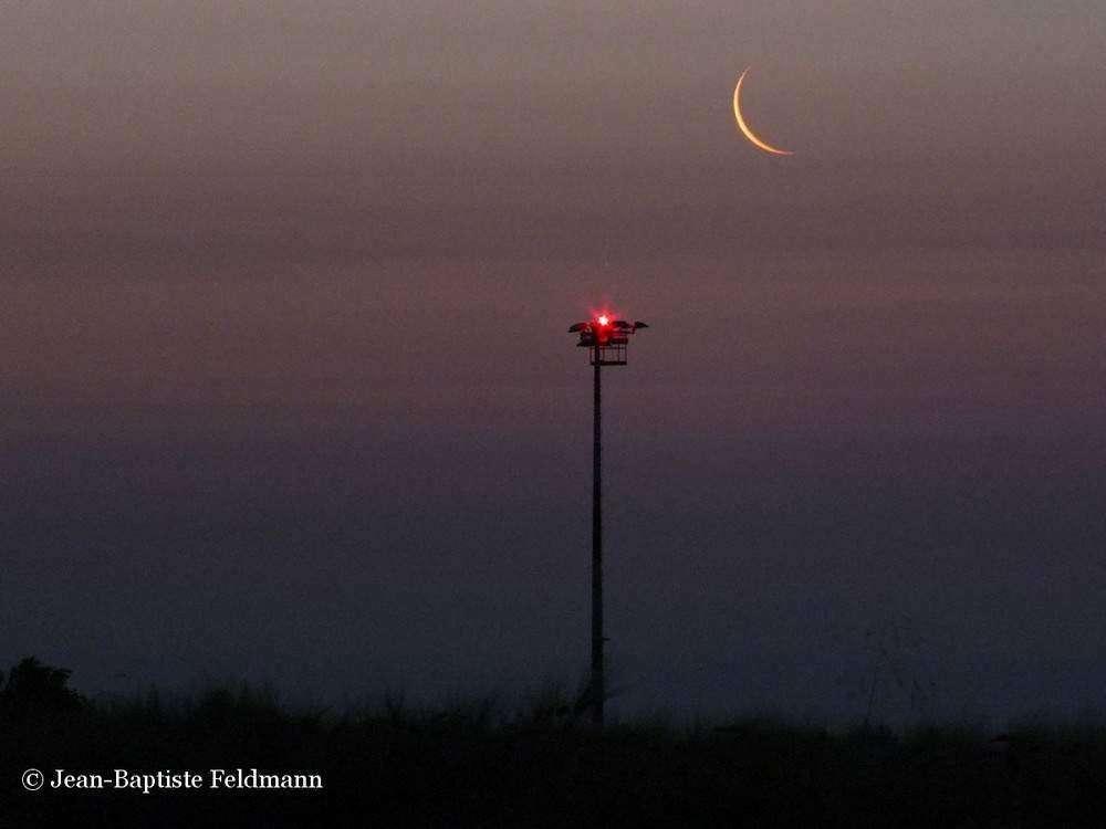 Le 9 août, la Lune nouvelle de la veille nous enverra seulement 4 % de la lumière d'une Pleine Lune. De quoi l'admirer mais aussi laisser la place aux autres astres. © Jean-Baptiste Feldmann