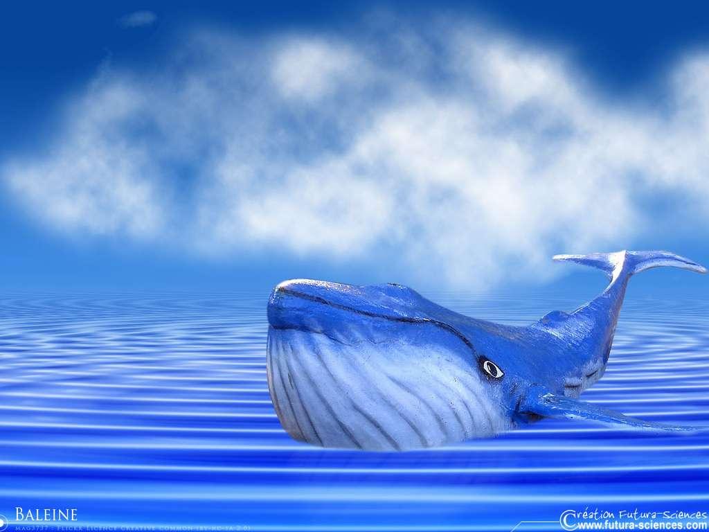 Baleine, le grand bleu