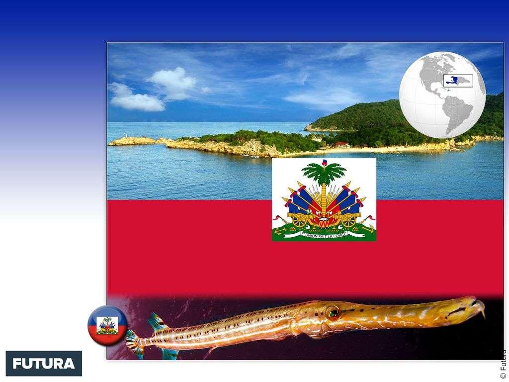 Drapeau : Haïti
