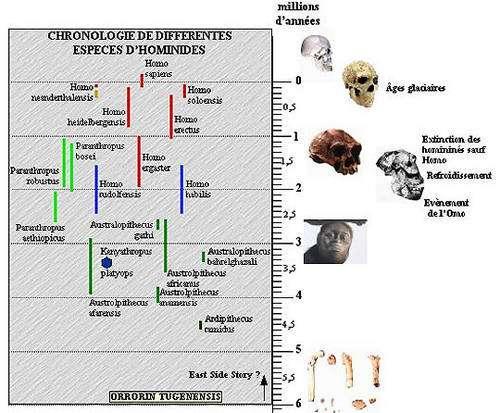 Evolution des hominides d'après Pascal Picq