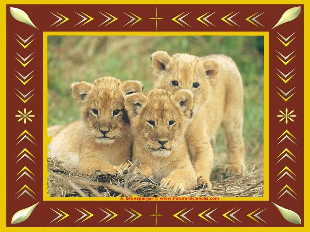 Lionceaux curieux