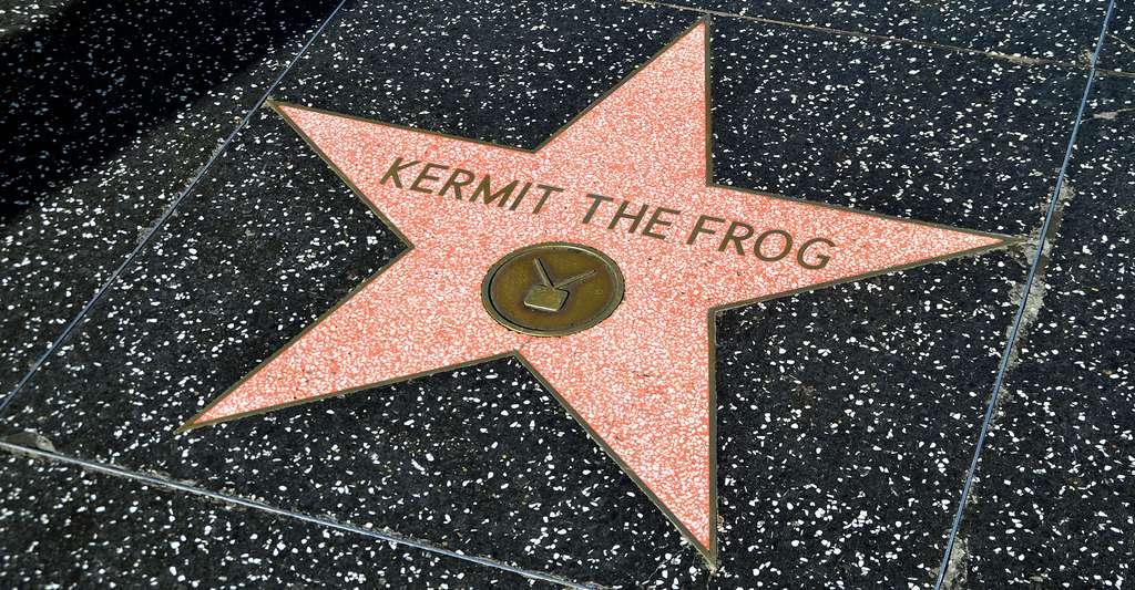 L'étoile de « Kermit the Frog » sur la promenade d'Hollywood. © Jpellgen, CC BY-NC 2.0