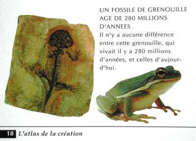 """Autre confusion créationniste, entre une """"grenouille"""" (en réalité une rainette), qui est un amphibien sans queue, et une salamandre fossile (amphibien muni d'une queue). Photo tirée de l'atlas de la création de Harun Yahya"""