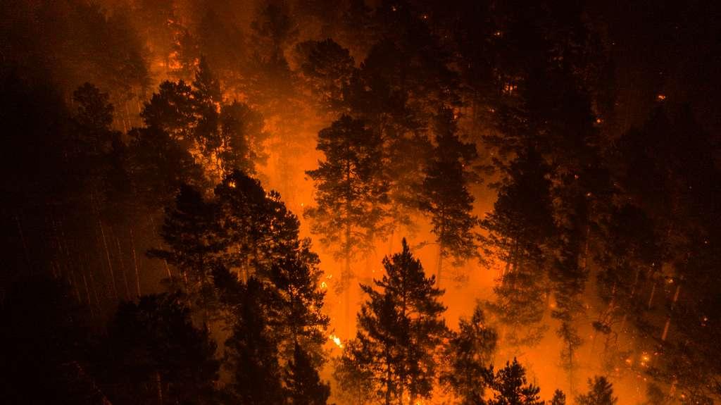 Des feux « zombie » de l'an passé se sont réveillés. © Greenpeace
