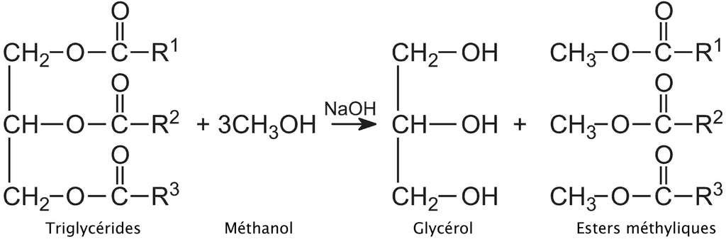 Le glycérol s'obtient par l'estérification des acides gras des huiles végétales. © DR