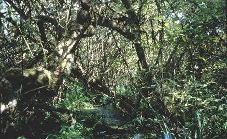 Vue du marais © WWW.Fr - Tous droits de reproduction interdit
