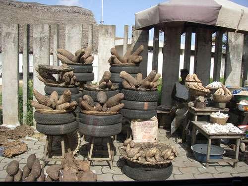 Tubercules d'igname mis en vente sur un trottoir de la ville de Cotonou (Bénin, Afrique de l'Ouest). Dans les pneus se dressent des tubercules de plusieurs variétés en mélange de l'espèce cultivée Dioscorea rotundata. Au premier plan, au centre de la photo, on observe des petits tubercules de patate douce. A droite de la photo, se trouvent des cossettes d'ignames (en gris à l'arrière plan) et de manioc (en blanc au premier plan). © IRD - © Serge Tostain Reproduction et utilisation interdites