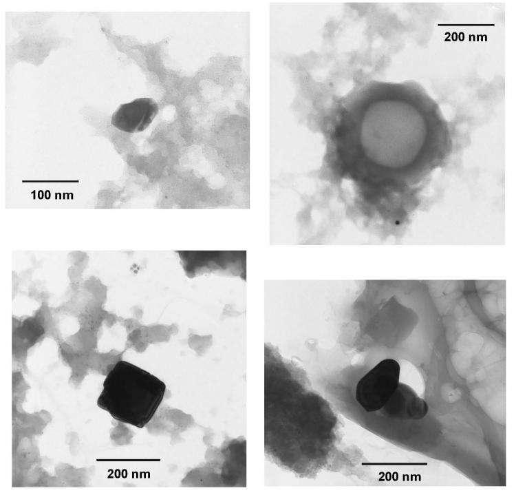 Images en microscopie électronique en transmission (réalisées à l'UMET, Université de Lille1) de minéraux condensés à partir de vapeurs et découverts dans les météorites Orgueil et Murchison. C'est parmi ces grains, mille fois plus petits qu'un cheveu, qu'ont été identifiées les poussières formées il y a plus de 4,5 milliards d'années par une supernova. Crédit : UMET (CNRS-Université de Lille 1)
