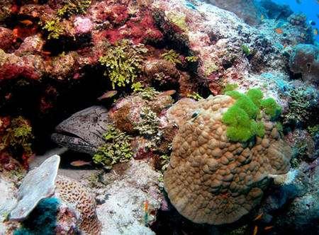 Dans cet environnement, on retrouve des représentants de tous les niveaux d'évolution, des bactéries ancestrales aux mammifères. Il est en outre admis, que seule une petite partie est connue. © : A. Diaz.
