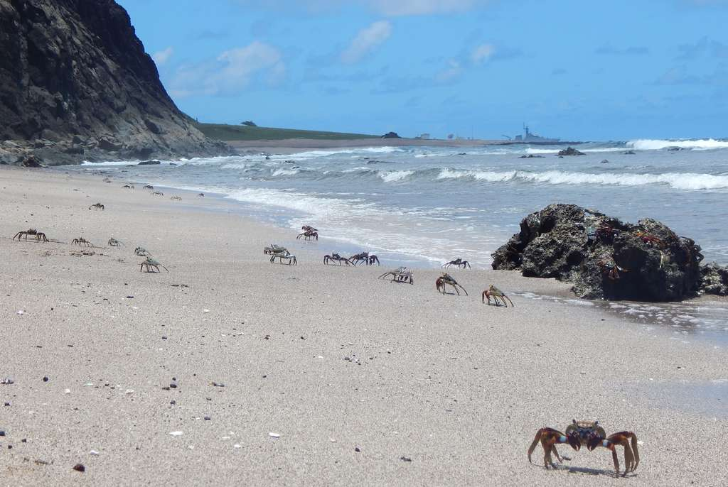 Une plage de l'île de Trindade. La végétation y est pauvre mais après la disparition des moutons, des chèvres et des porcs, elle commence à reprendre des couleurs. © AFP Photo, Vitoria Velez