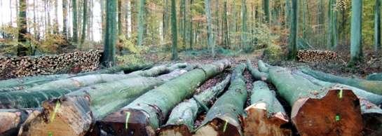 Pour produire du papier, les forêts primaires, gardiennes de biodiversité, sont remplacées par des plantations d'eucalyptus... © DR