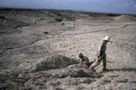 Le lieu de la découverte, dans la vallée de l'Awash, au nord-est de l'Ethiopie (Crédits : Tim D. WhiteBrill Atlanta)
