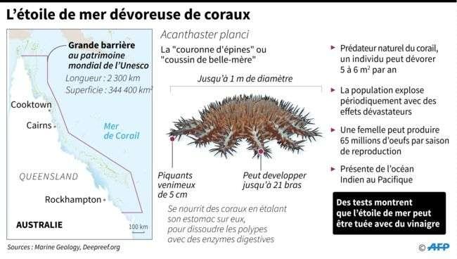 L'étoile de mer « couronne d'épine » se nourrit de coraux. © Marine Geology, AFP