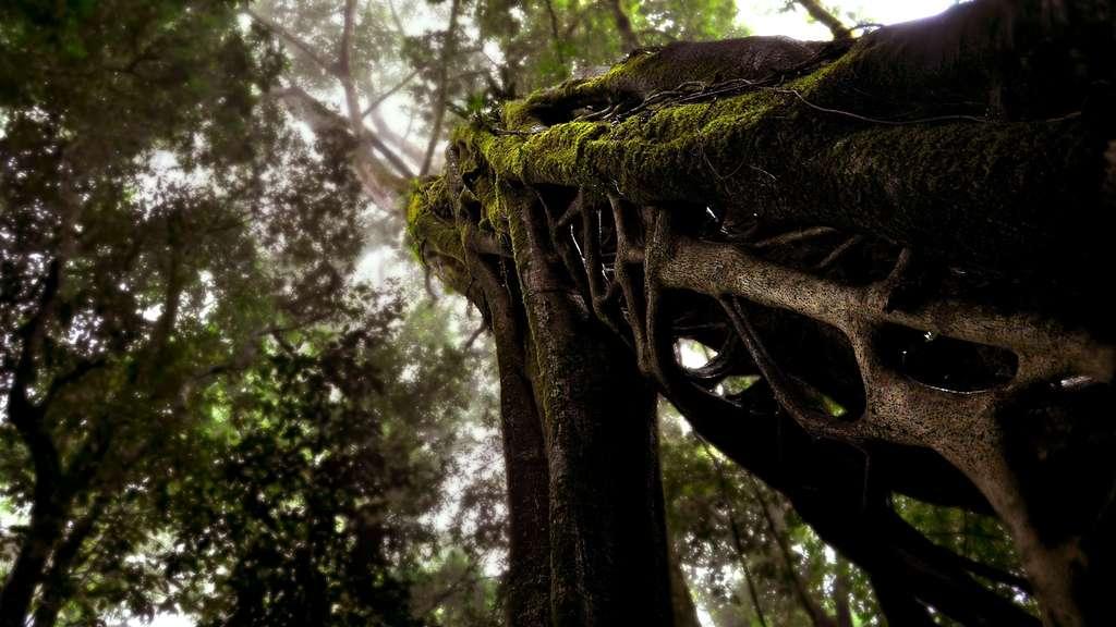 Les forêts de nuages de Monteverde, au Costa Rica