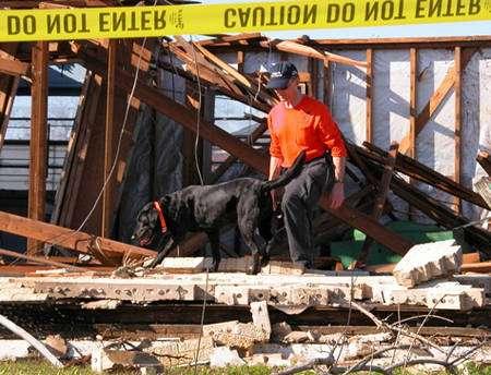 Chien de recherche en intervention après un tremblement de terre. © Boxchain, Flickr, Creative Common, CC by-nc-sa 2.0